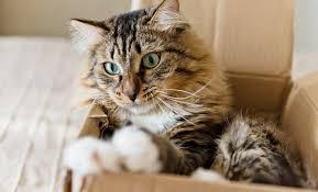 10 conseils lorsqu'on déménage avec son animal de compagnie